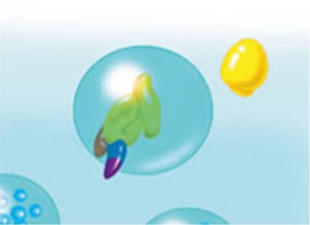 細胞質内への放出の図