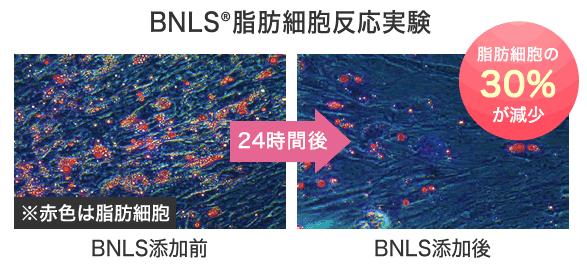 BNLS®脂肪細胞反応実験